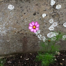 Delicate flower on rough dirty concrete