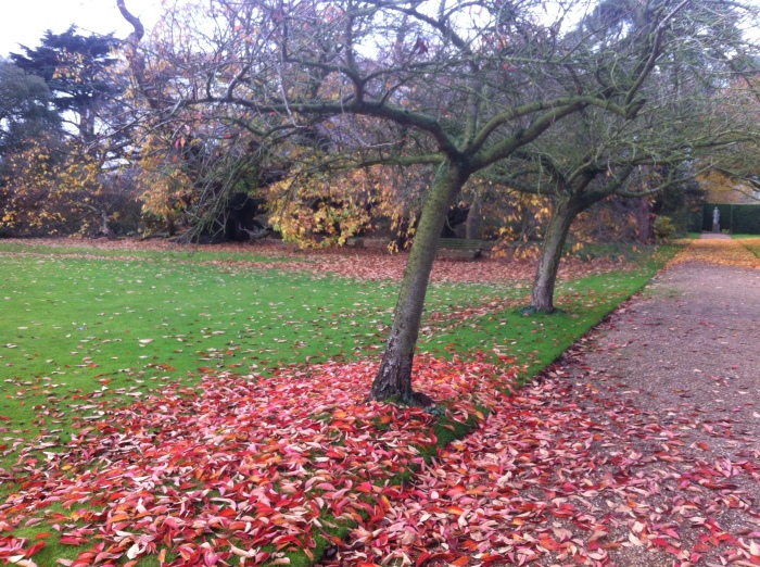 colourful leaves dropping to the ground